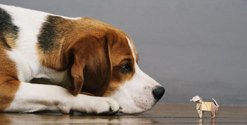 Beagle Life Insurance >> Beagle Street Release The Pounds