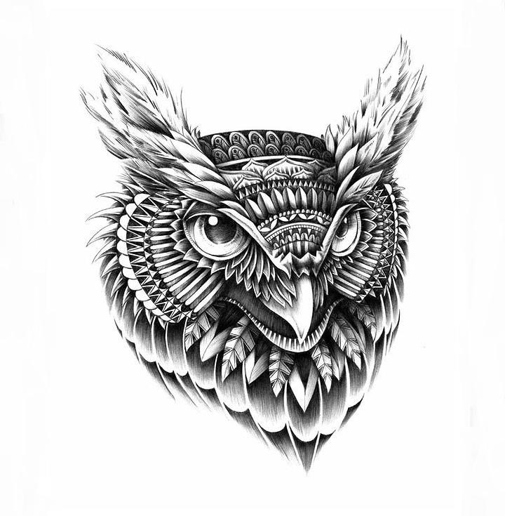 Sketches Of Owls Faces Wwwimgarcadecom Online Image Arcade