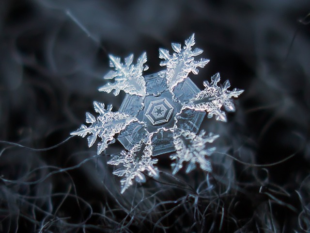 Macro Snowflakes