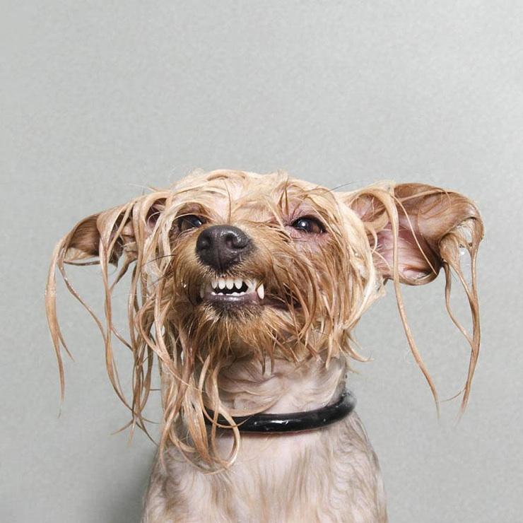 wet-dogs-sophie-gamand-7.jpg